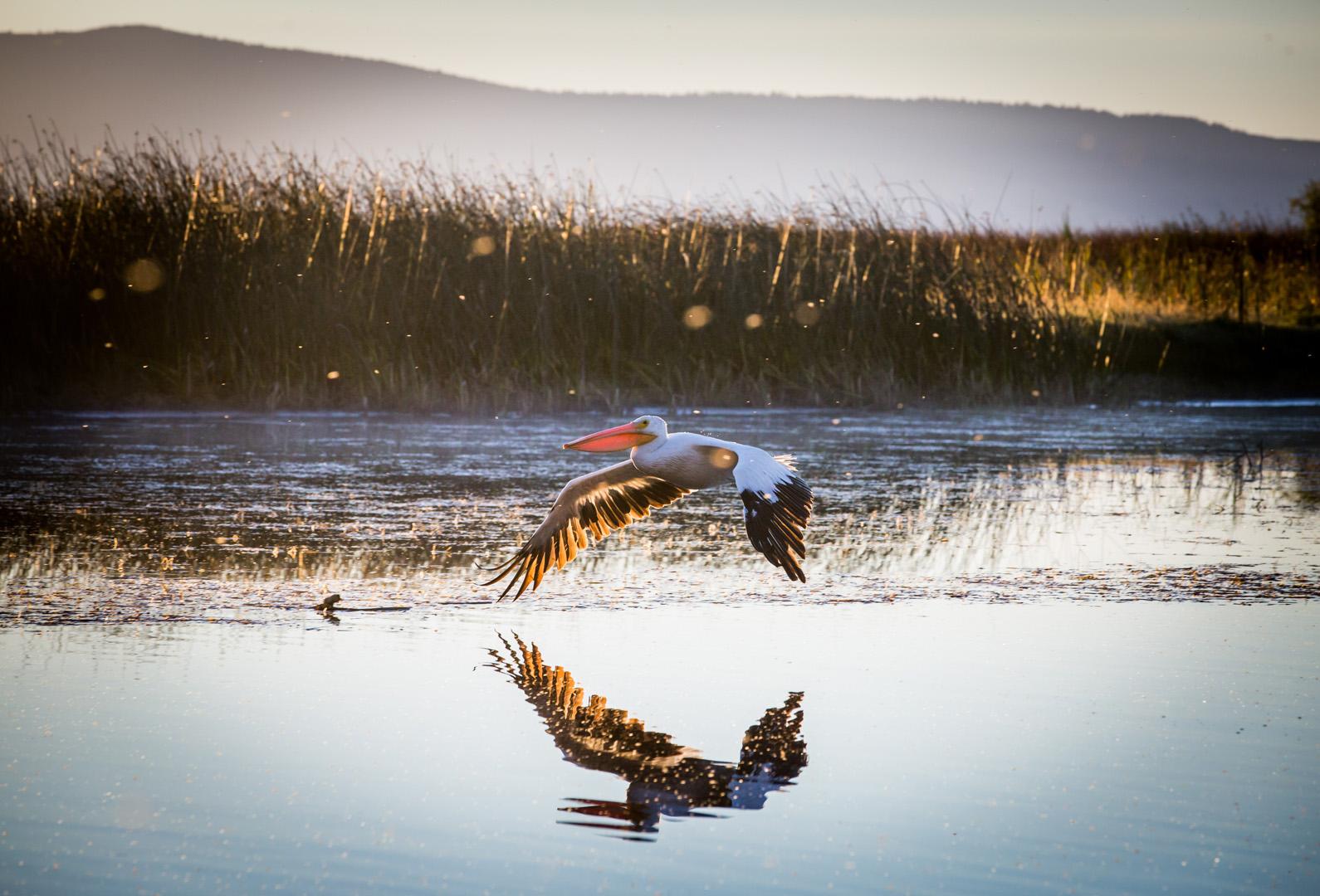 Bedrock Film Works - Birds