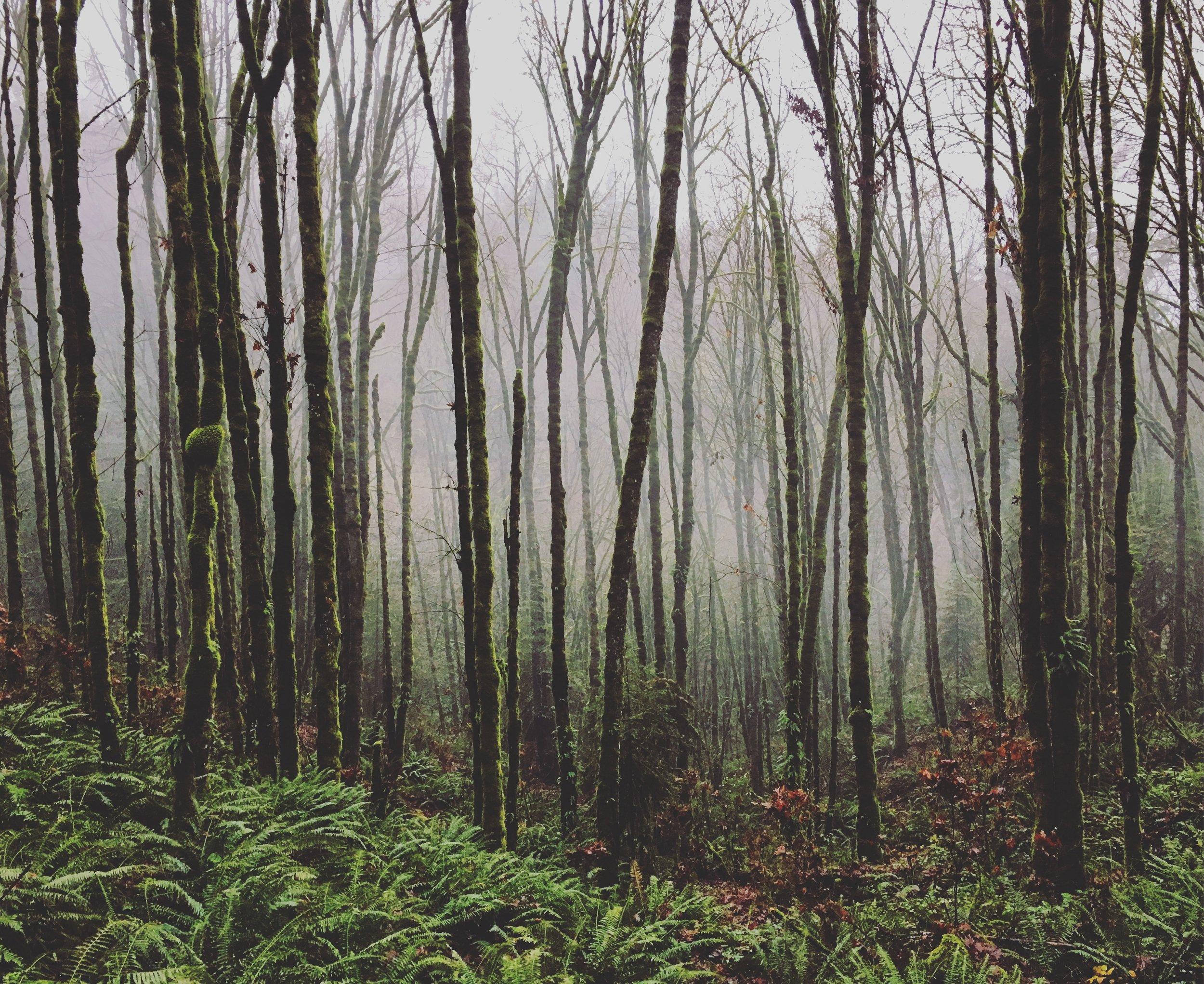 Bedrock Film Works - Forest