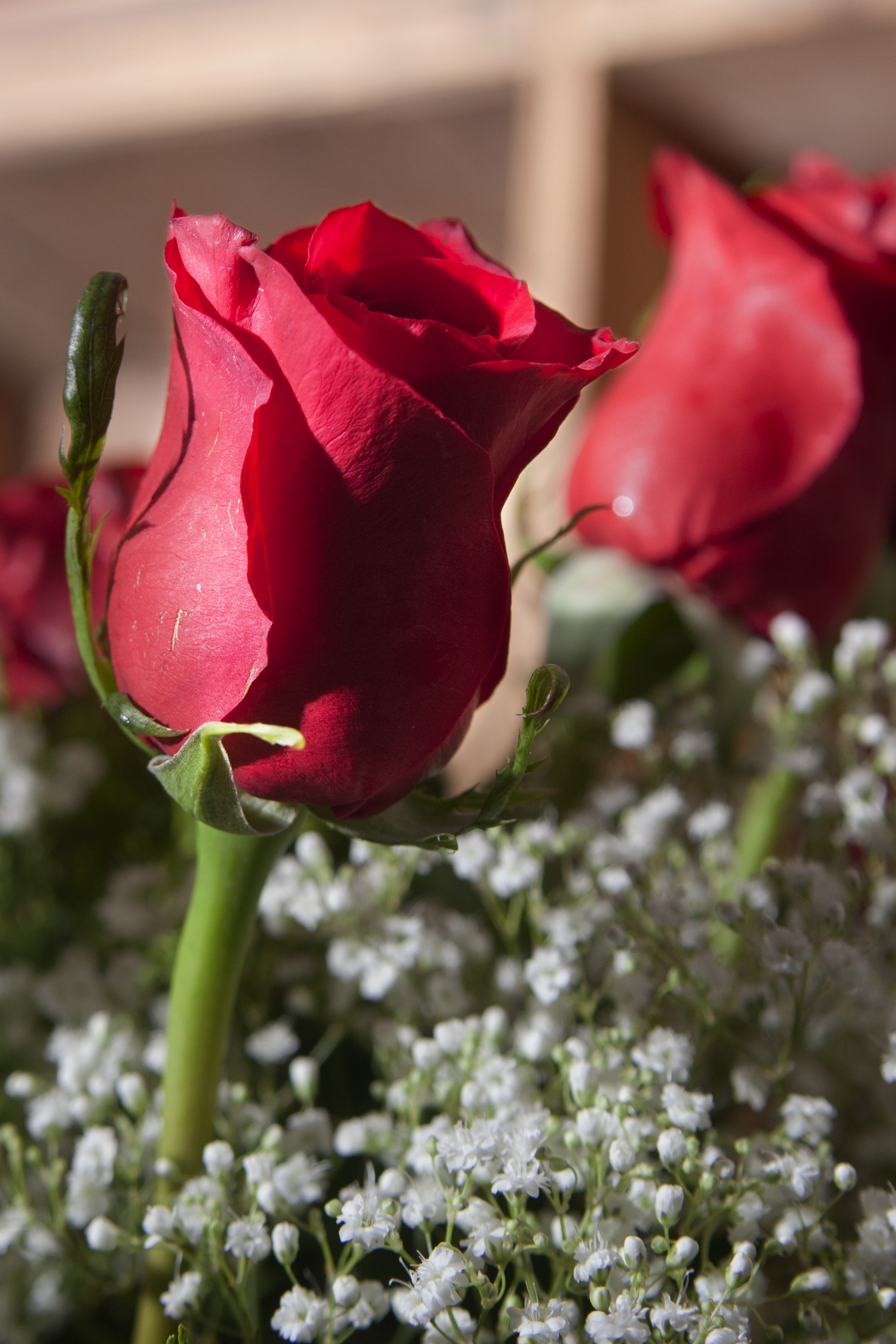 one rose.jpg