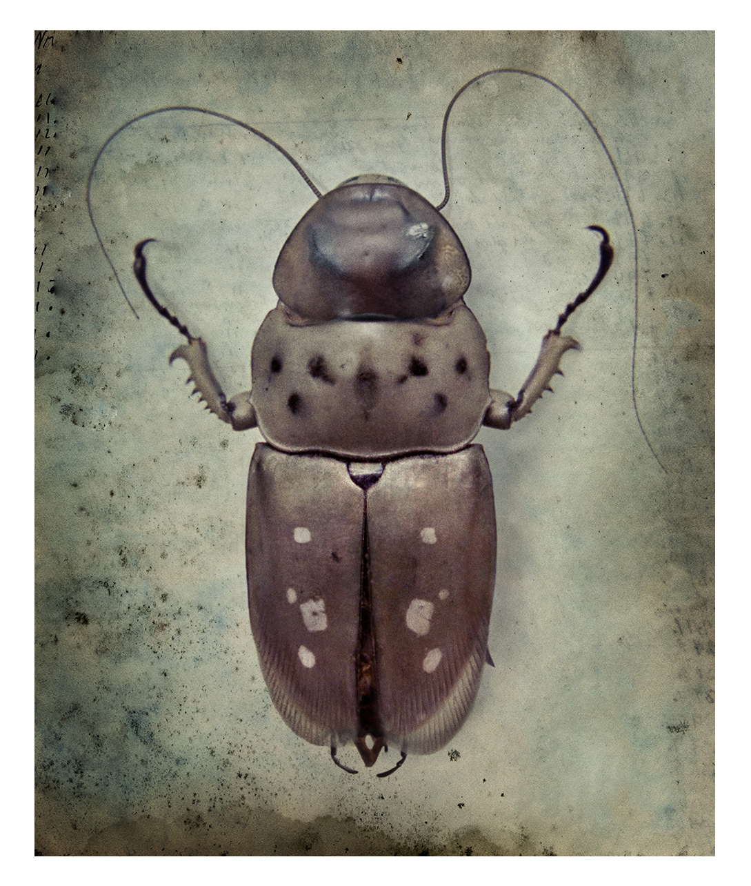 Beetlerouch