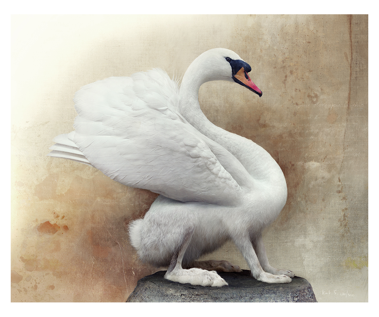 Mute swanhare