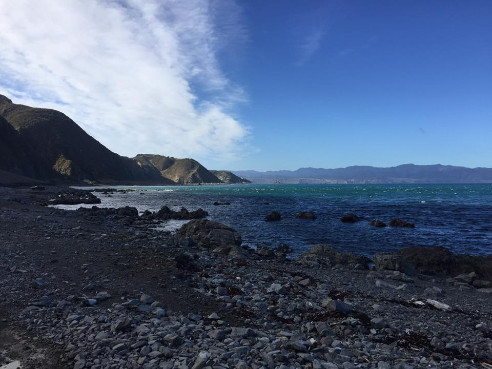 Red Rocks Coastal Hike in Wellington, NZ 2016.