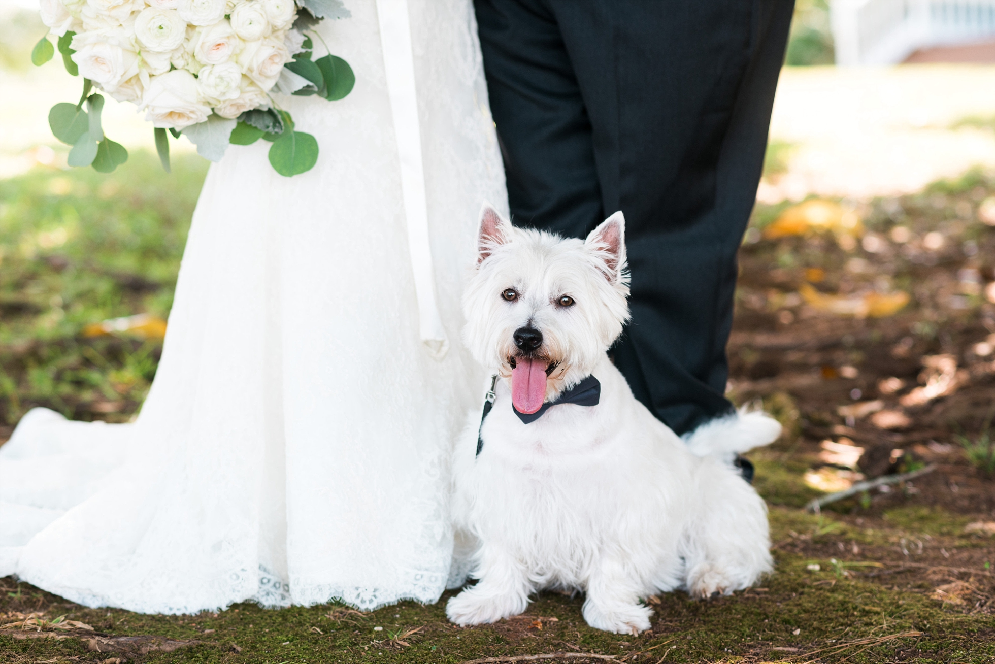 Bride & Groom with dog | Kyle & Erin | Scarbrough Wedding | Children's Harbor | Laura Wilkerson Photography