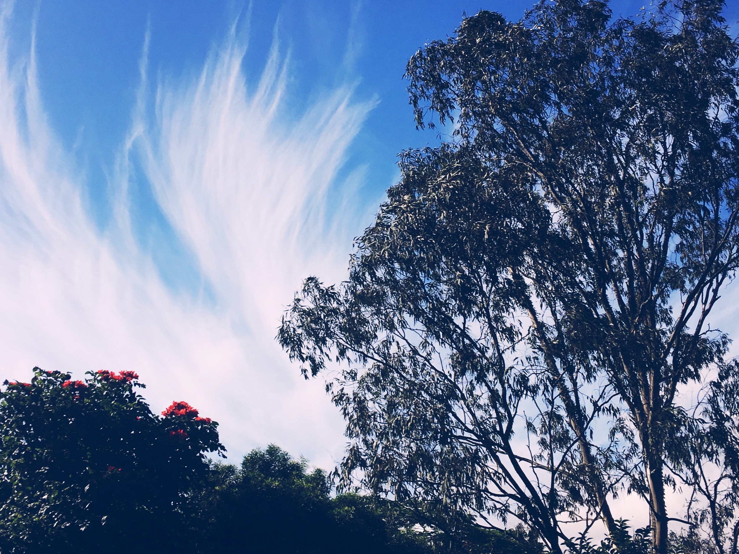 How pretty are these feathery clouds?