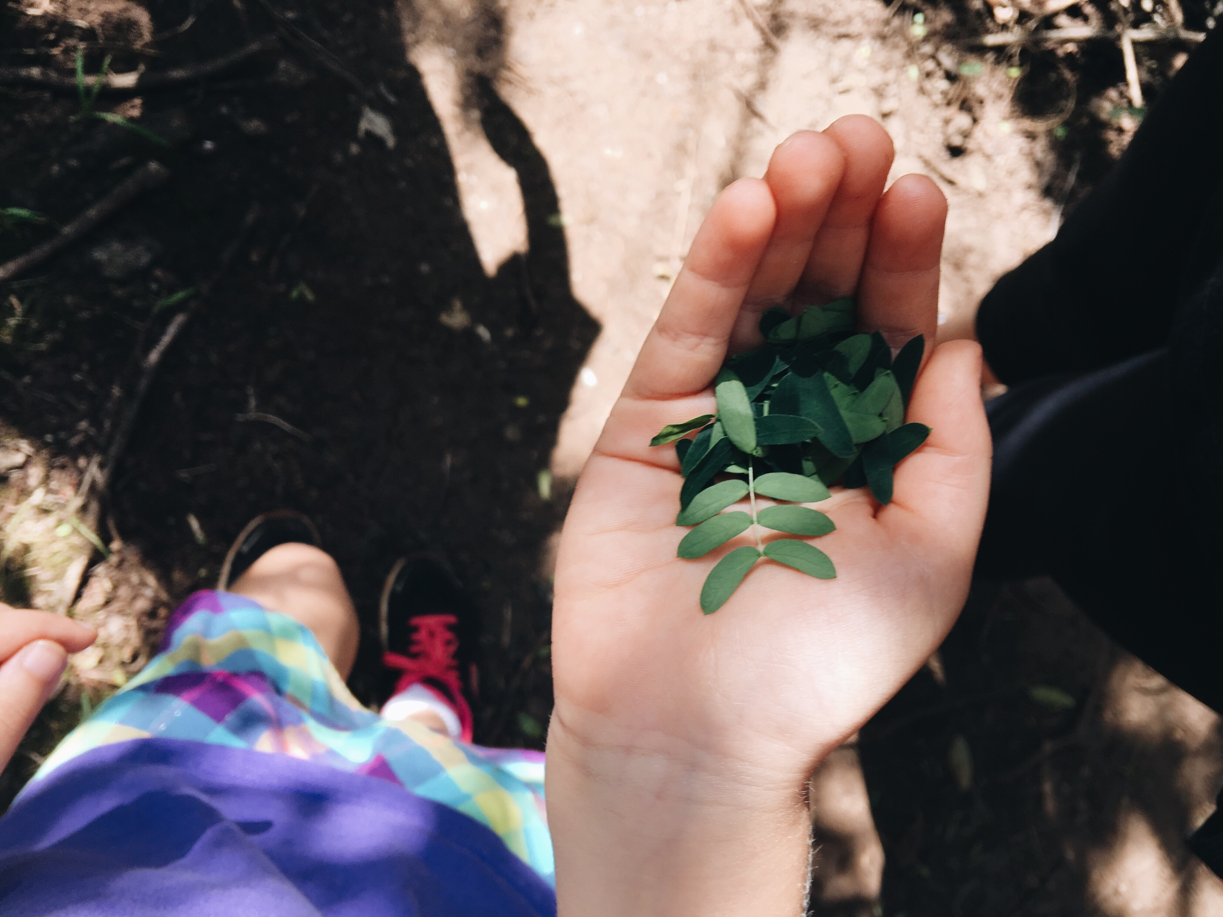 Nora found me some adorable baby leaves.