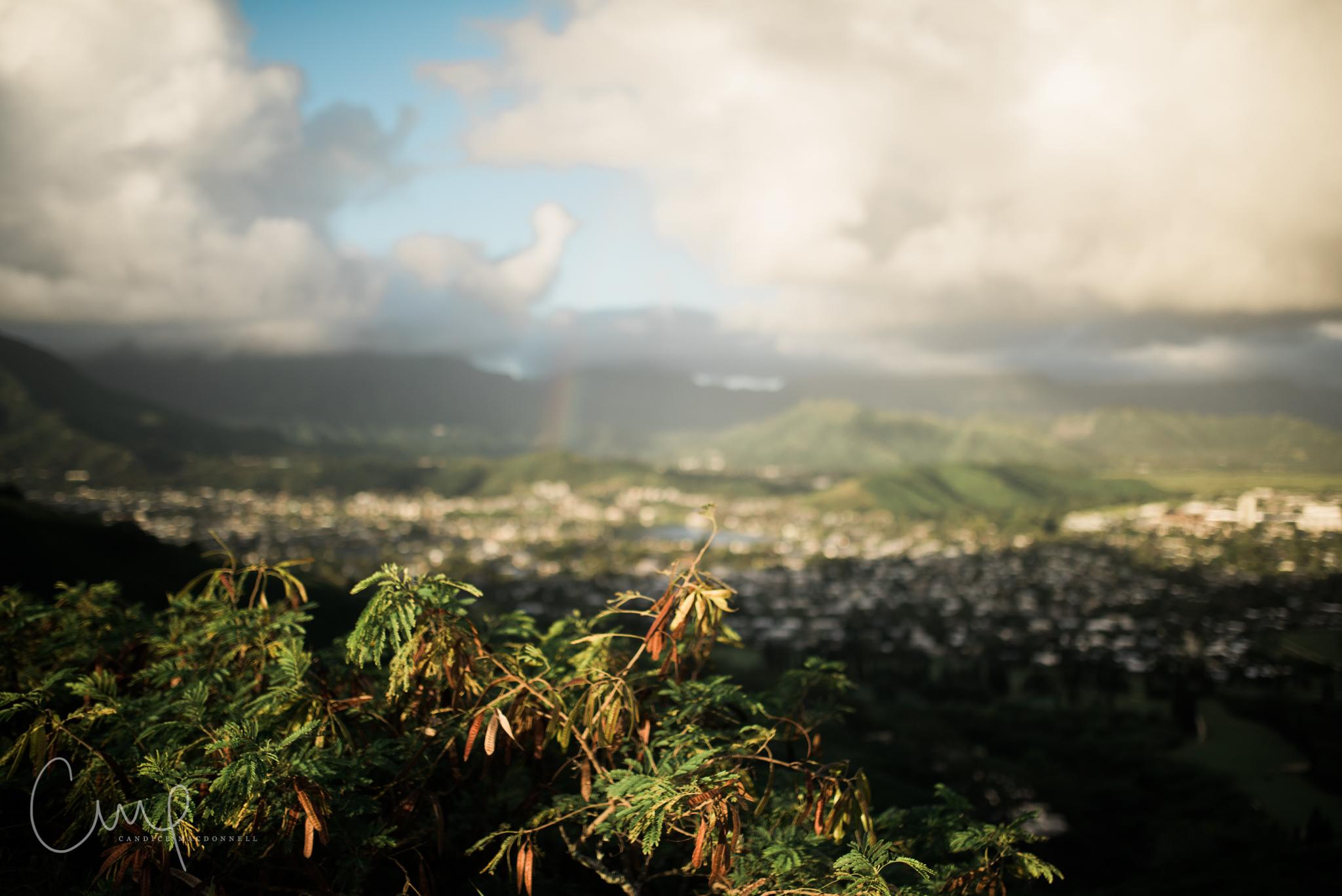 plants at pillboxes lanikai oahu hawaii pretty clouds