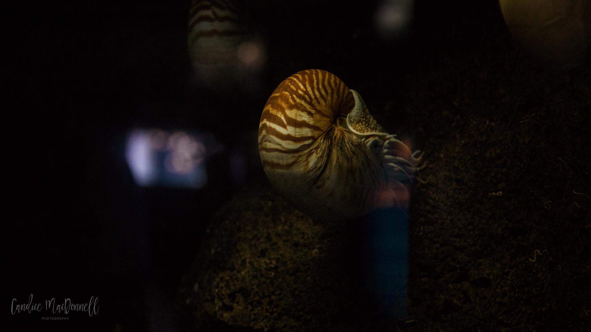 aquarium sea creature prehistoric pokemon