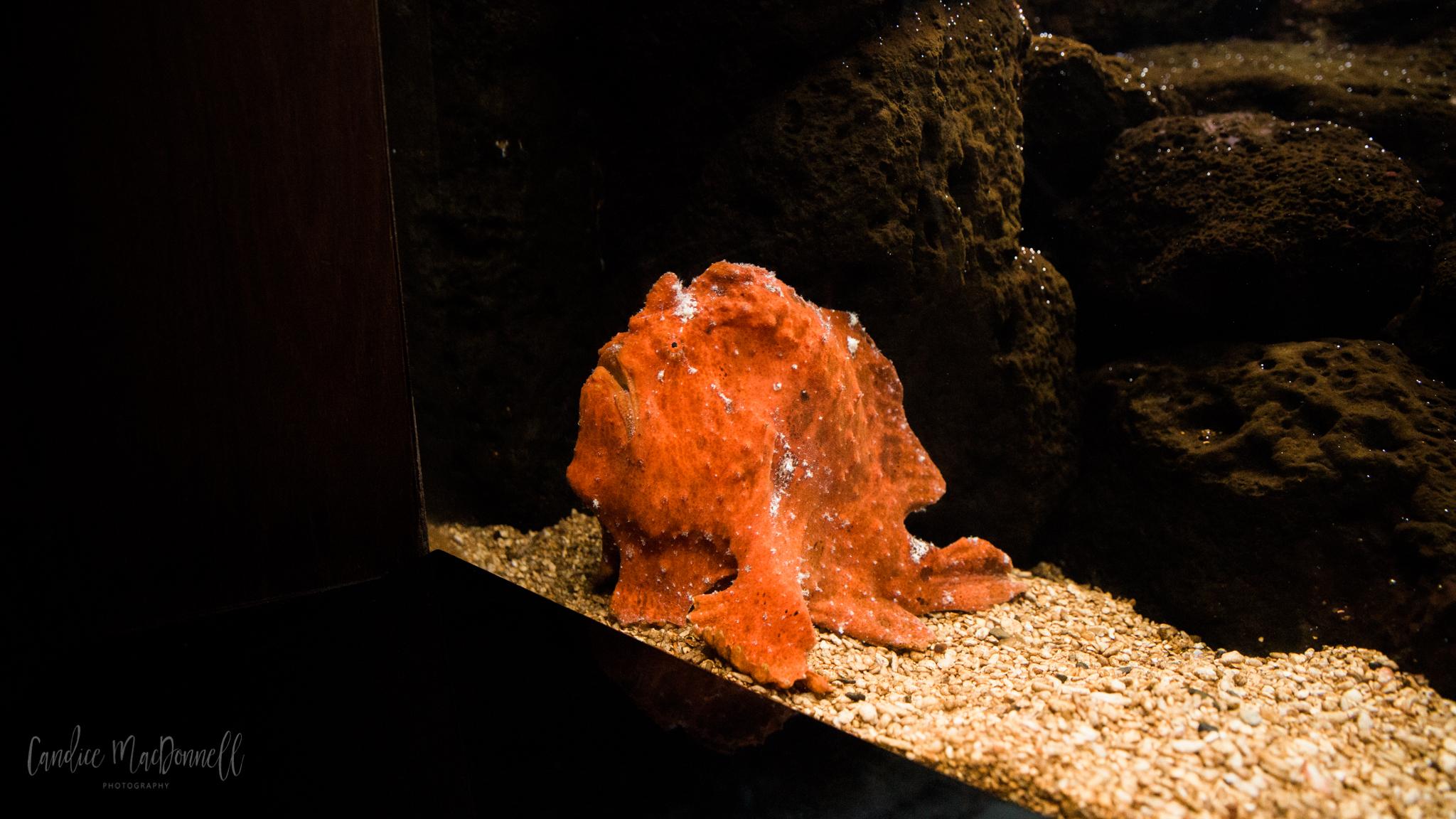 frog fish aquarium waikiki