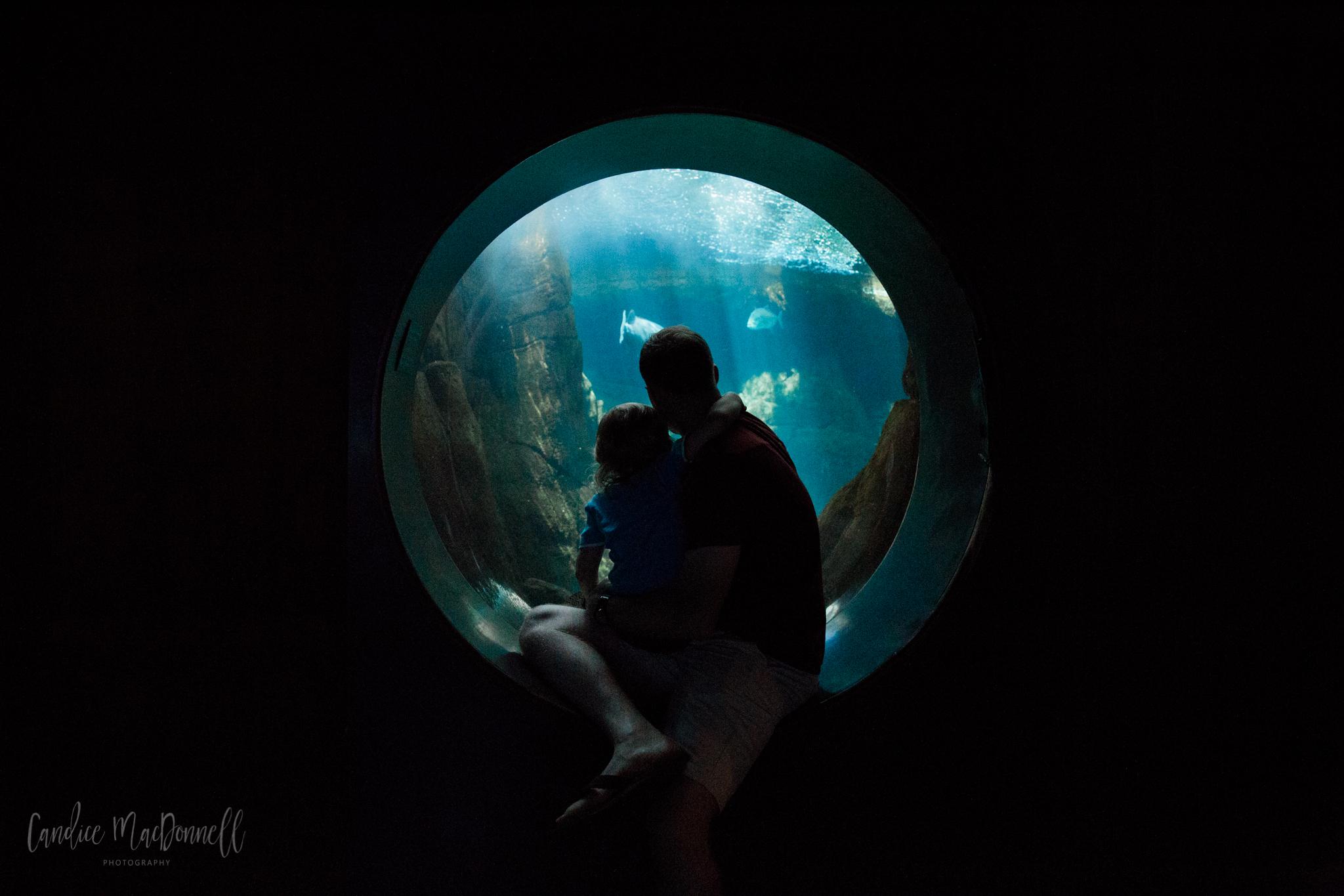 dad husband and boy sitting observing aquarium fish