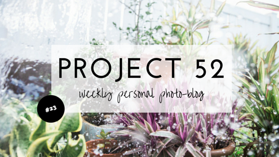 P52-WEEK-23-CANDICE-MACDONNELL-PHOTOGRAPHY.png