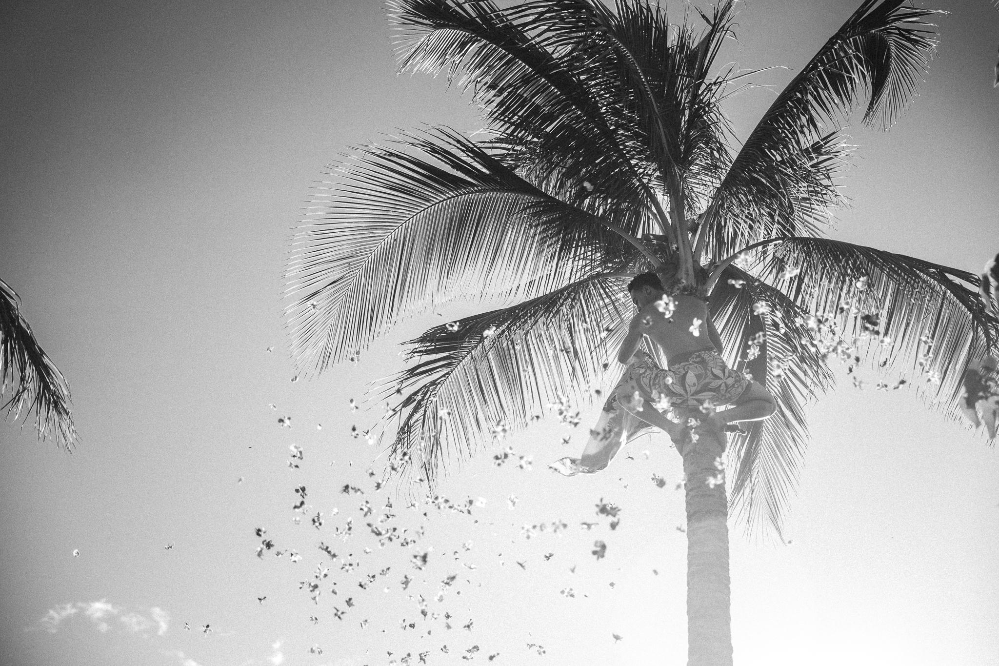 palm tree at luau shower of flowers oahu hawaii photography