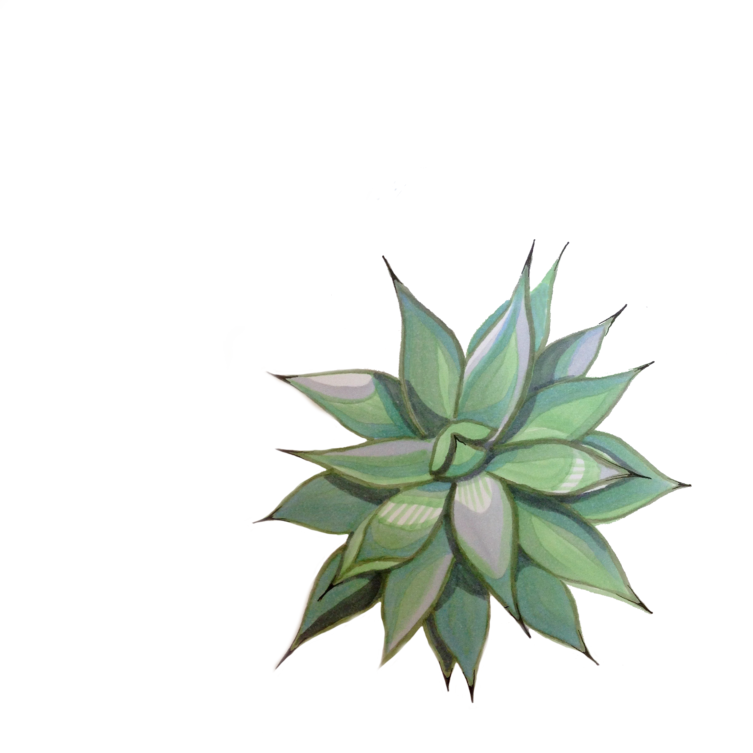 Agave 2.png