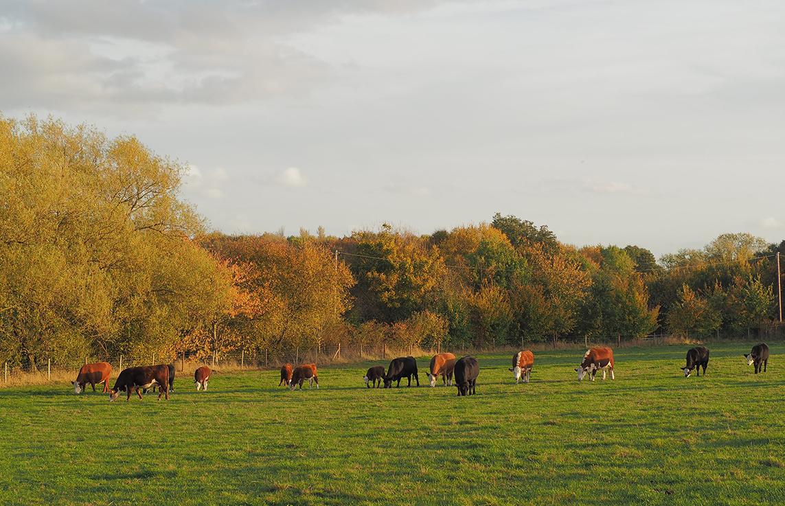 Autumn-Lower-Dairy-Farm.jpg