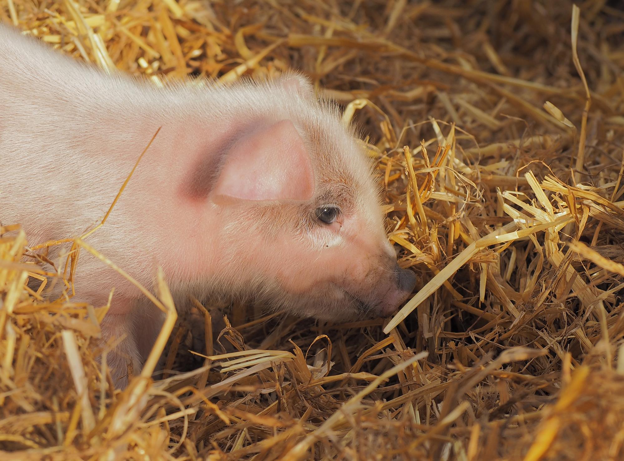 Piglets-Farm-Shop-Essex.jpg