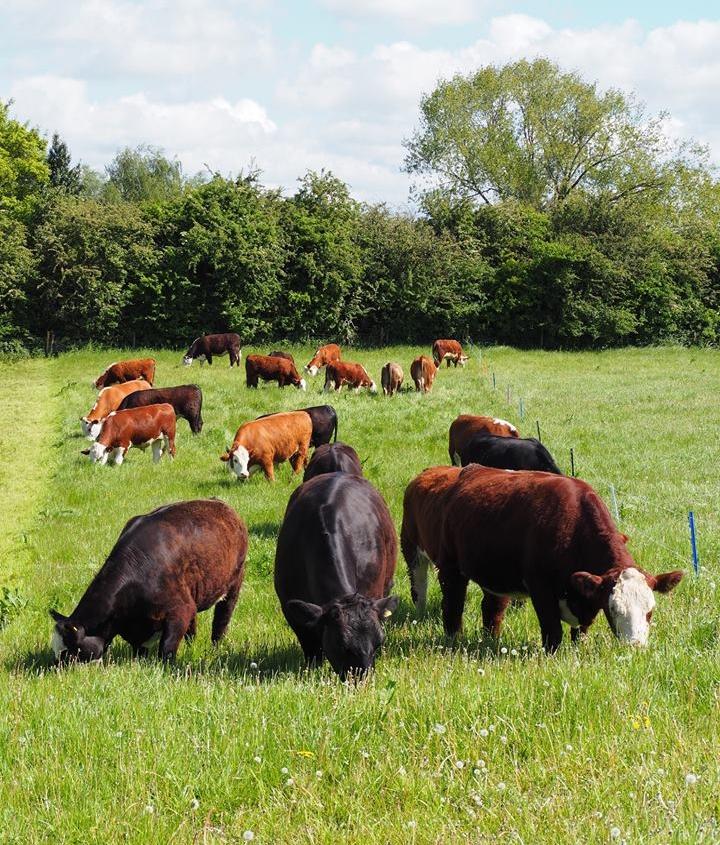 Farm-Shop-Essex.jpg