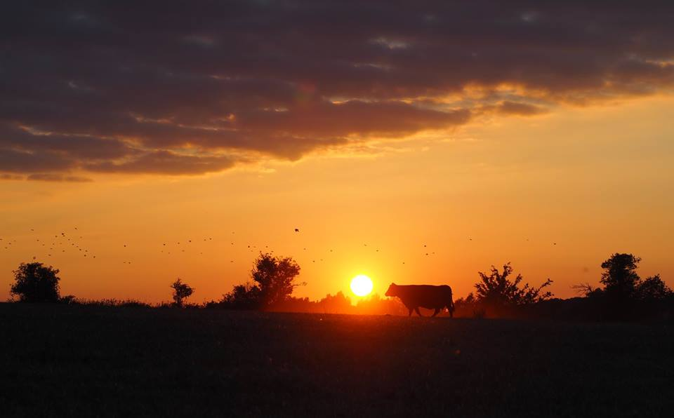 Sunset-Essex-Lower-Dairy-Farm.jpg