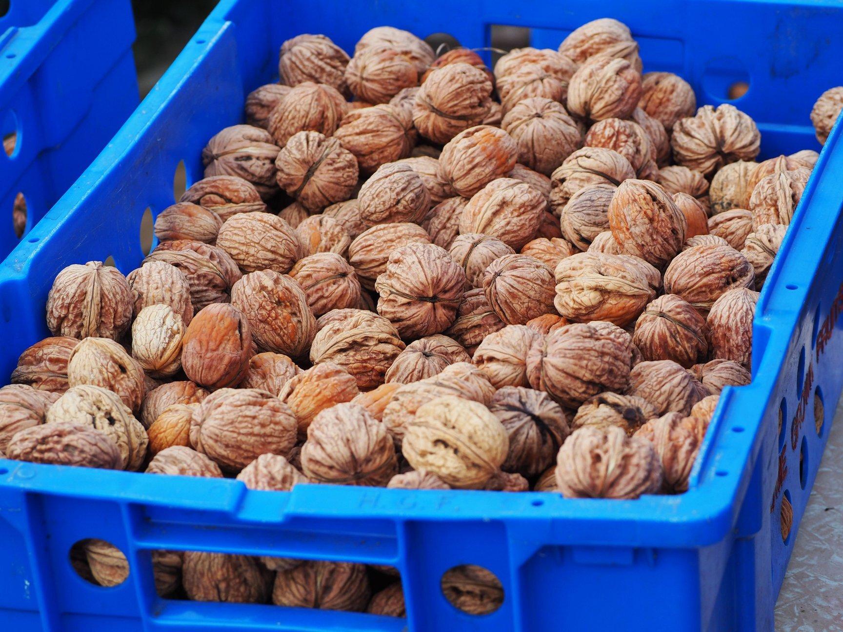 Wet-Walnuts-Boxted-Essex