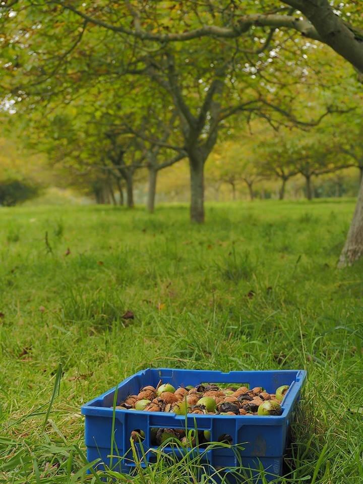 Boxted-Wet-Walnuts-Lower-Dairy-Farm.jpg