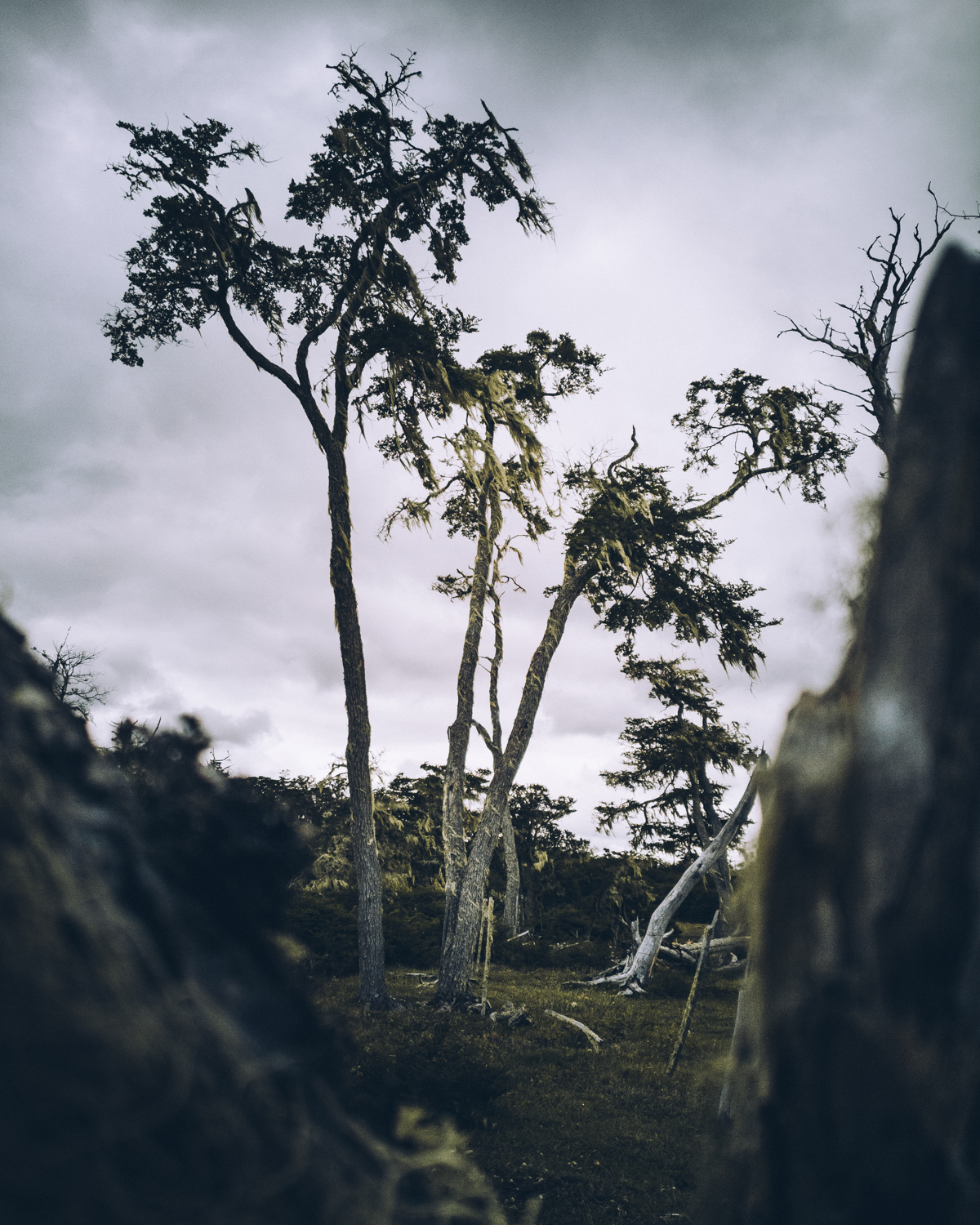 Here I am utilizing a dead tree in the foreground to create some mystery about this forest in Argentina. With the Huawei Mate10 Pro it is crucial to go really close, otherwise the depth of field will not allow the out-of-focus area.