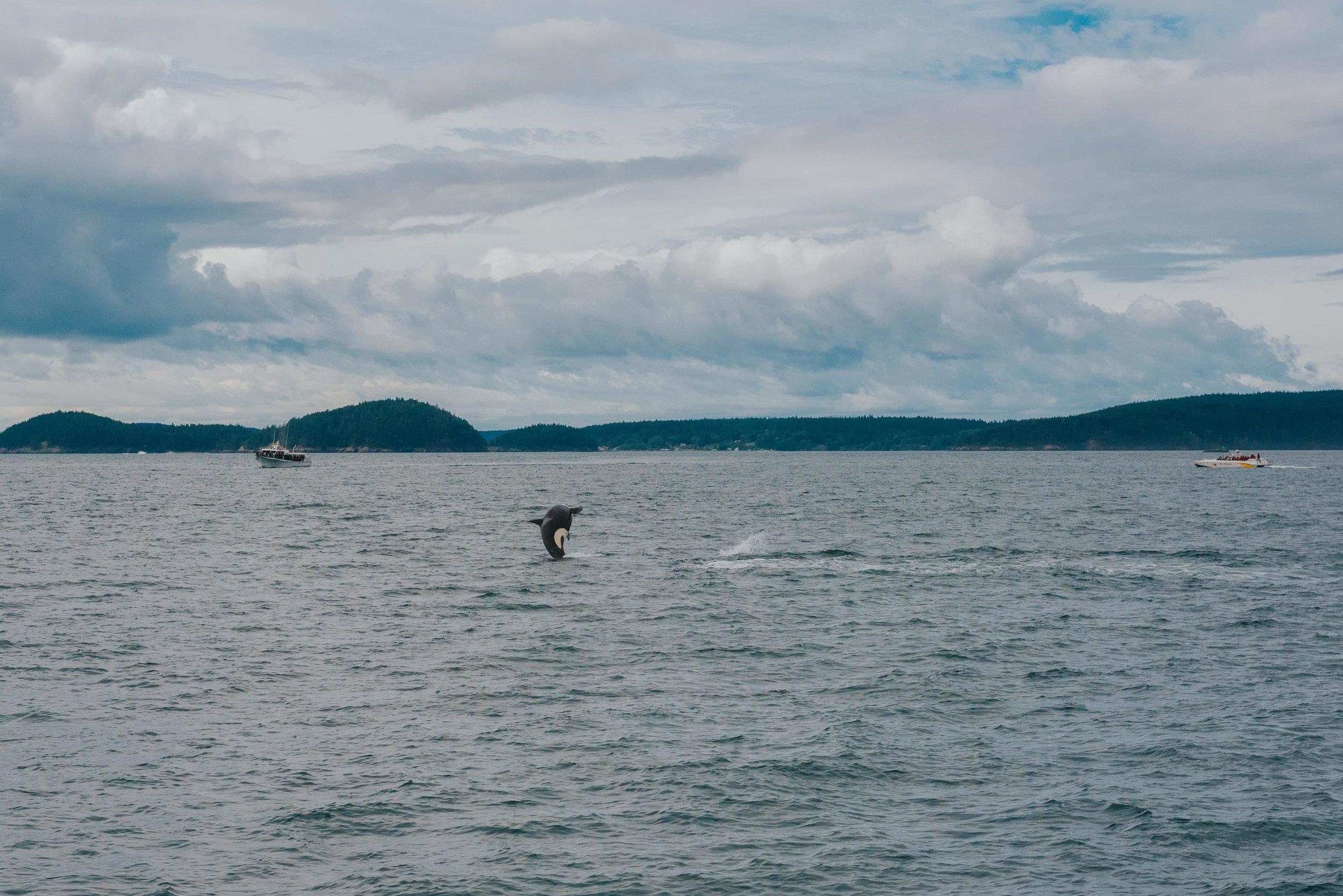 Orcas-Island-Wedding-Photographer (36 of 106).jpg