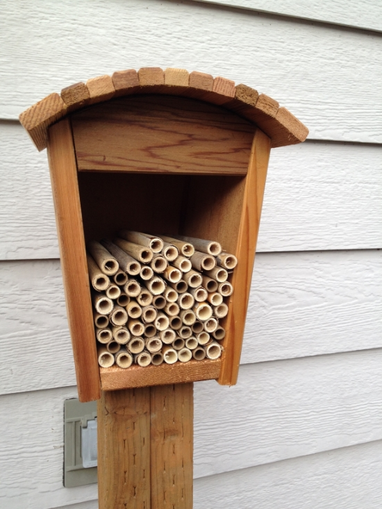 This bee house can hold tubes or wood trays for both spring and summer native bees