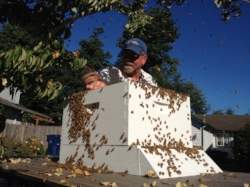 My Dad, helping me capture my first honeybee swarm.