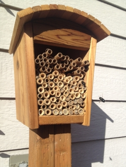 My most active mason bee house. Consider placing your house near a pathway to encourage visitors to watch the action. It's completely safe, as mason bees are gentle and do not have a traditional bee sting.