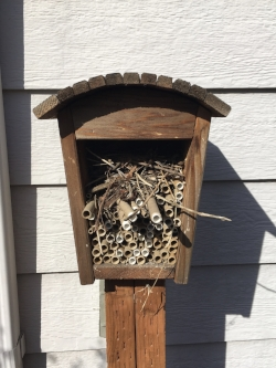 Bird nest inside a bee house.