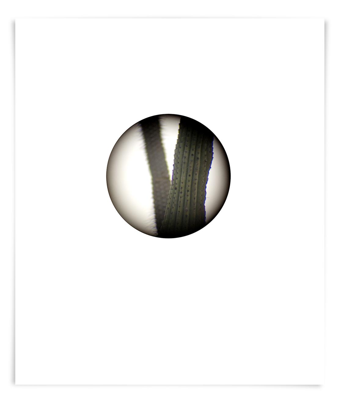 The Black Mountain Organ Pipe (ST01 090911)   24 x 18 in (61 x 46 cm)