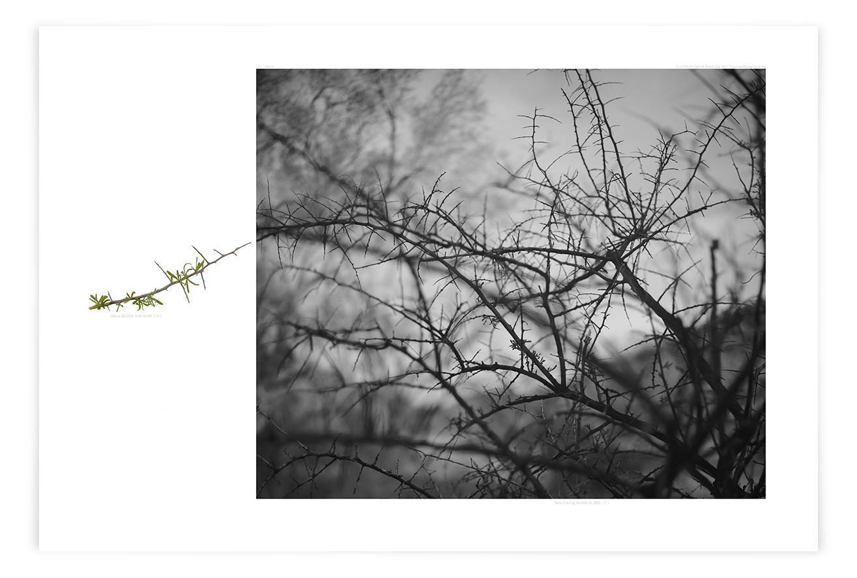 The Black Gap Wolfberry (LF01 050820)   24 x 39 in (61 x 99 cm)