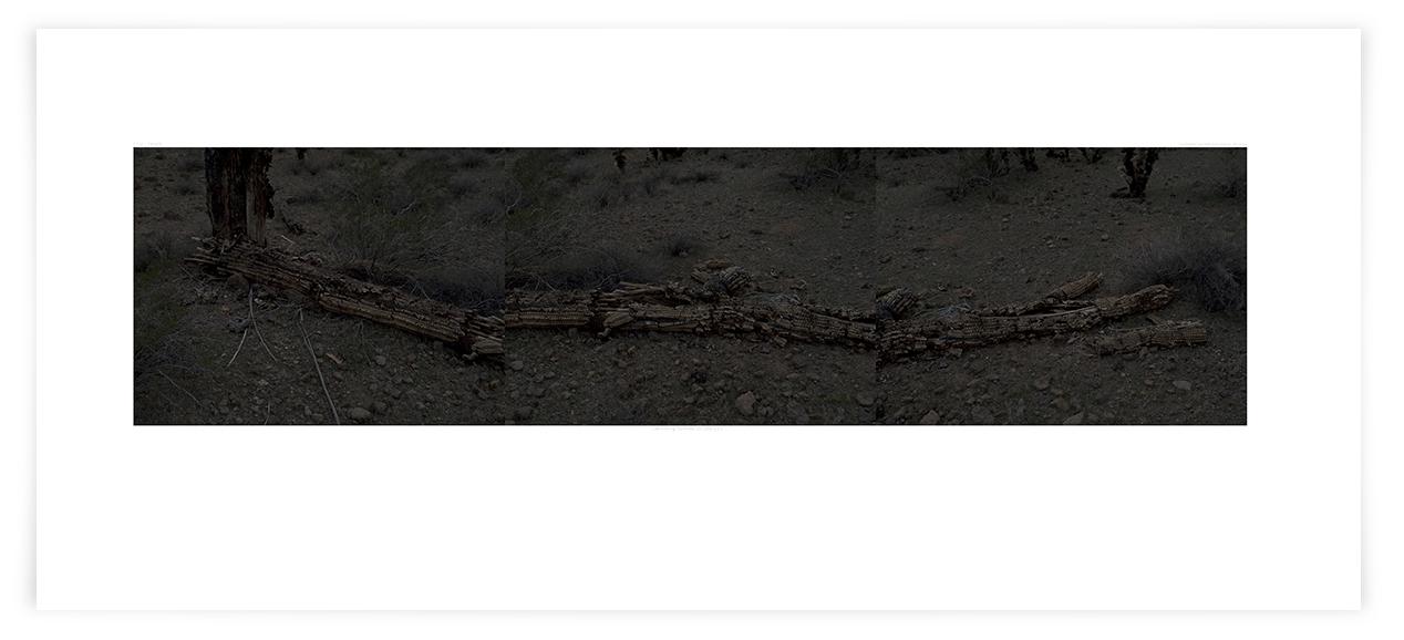 The Apache Tear Saguaro (CG16 080408)   24 x 51 in (61 x 130 cm)