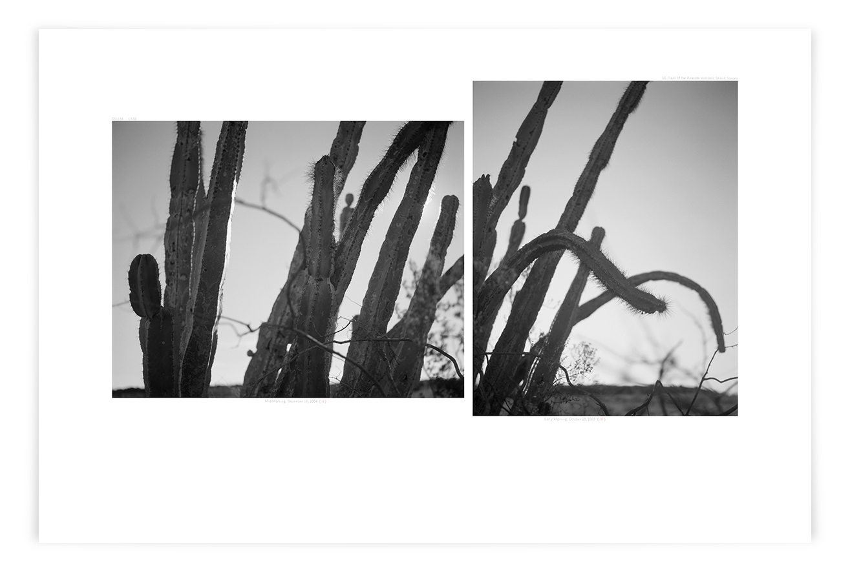 The Ives Flow Senita (LS02 051126)   24 x 35 in (61 x 89 cm)