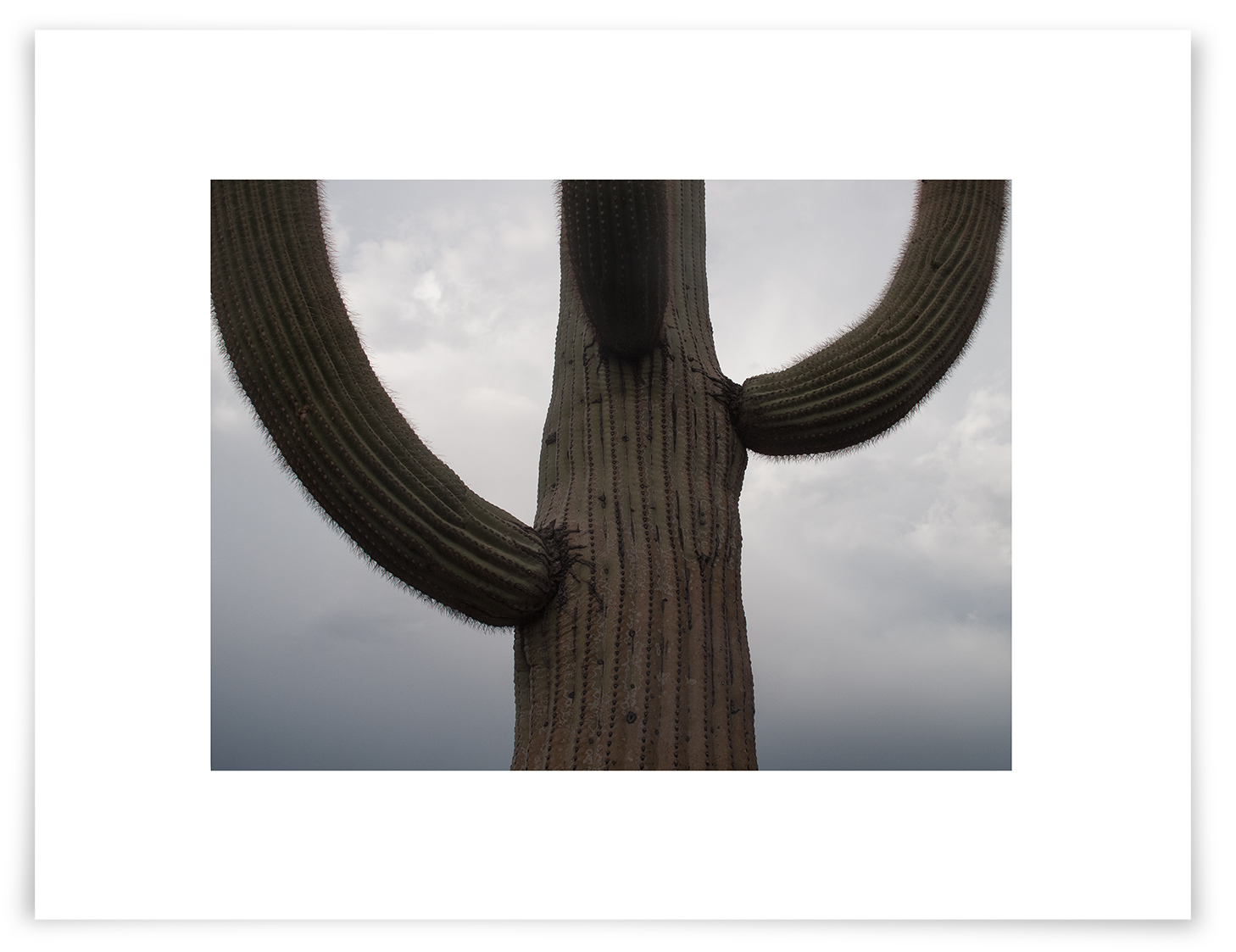The Tom Thumb Saguaro (CG10 130804)   18 x 24 in (46 x 61 cm)