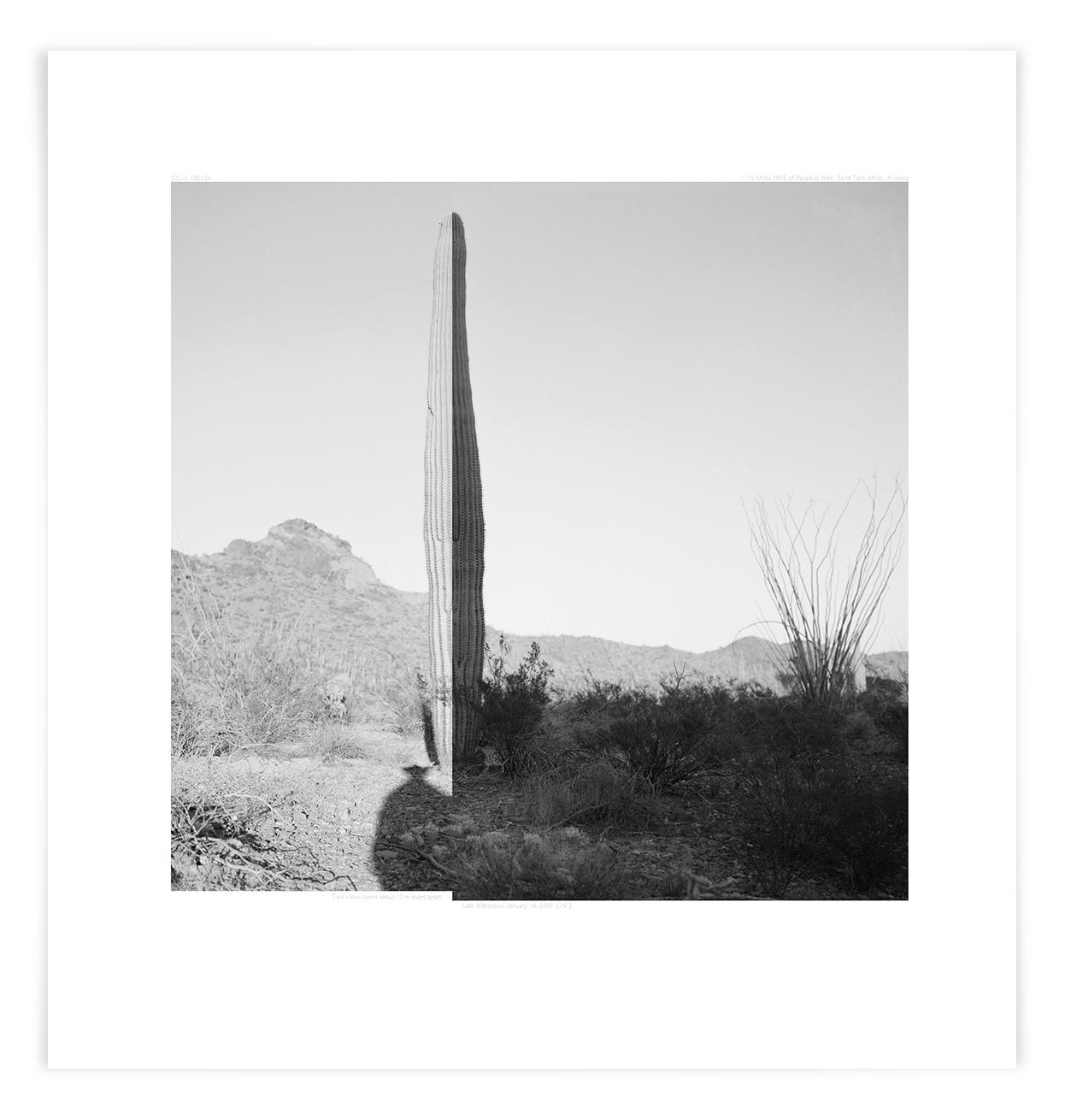 The Sand Tank Saguaro (CG15 080124)     26 x 24 in (66 x 61 cm)
