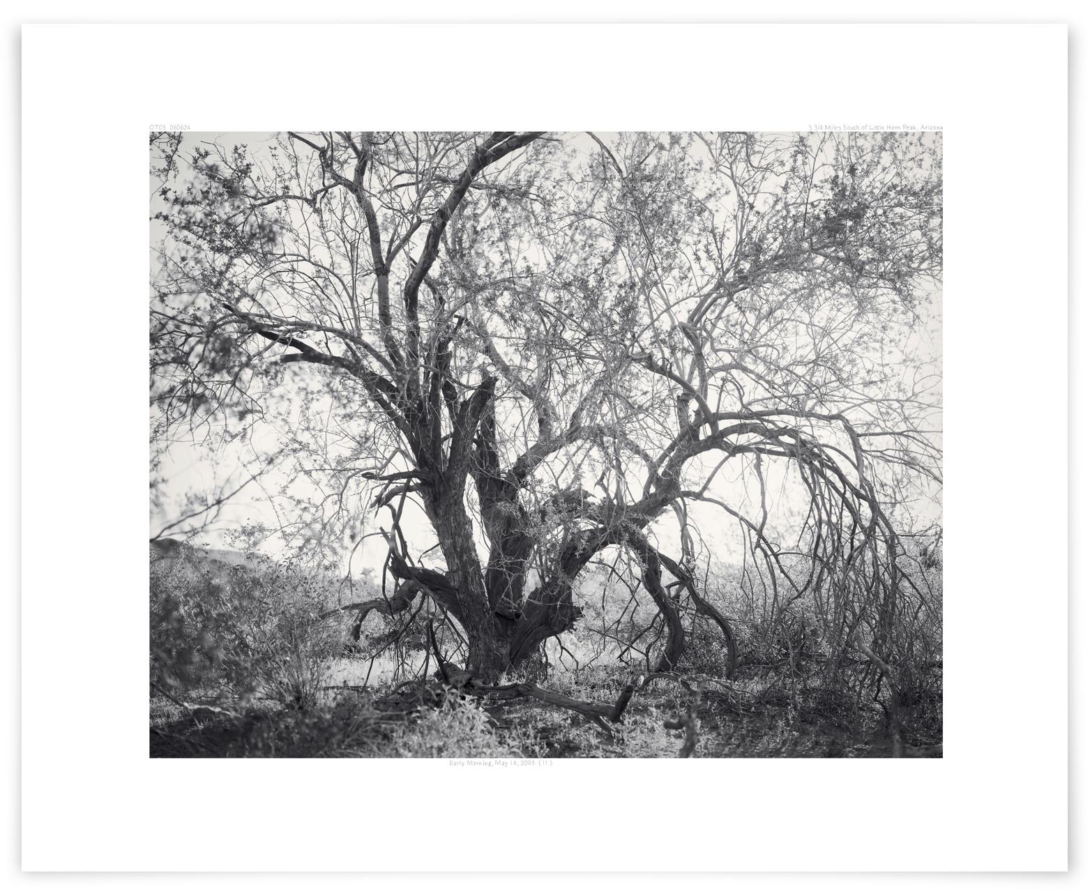 The Palomas Plain Ironwood (OT03 060624)   24 x 31 in (61 x 79 cm)