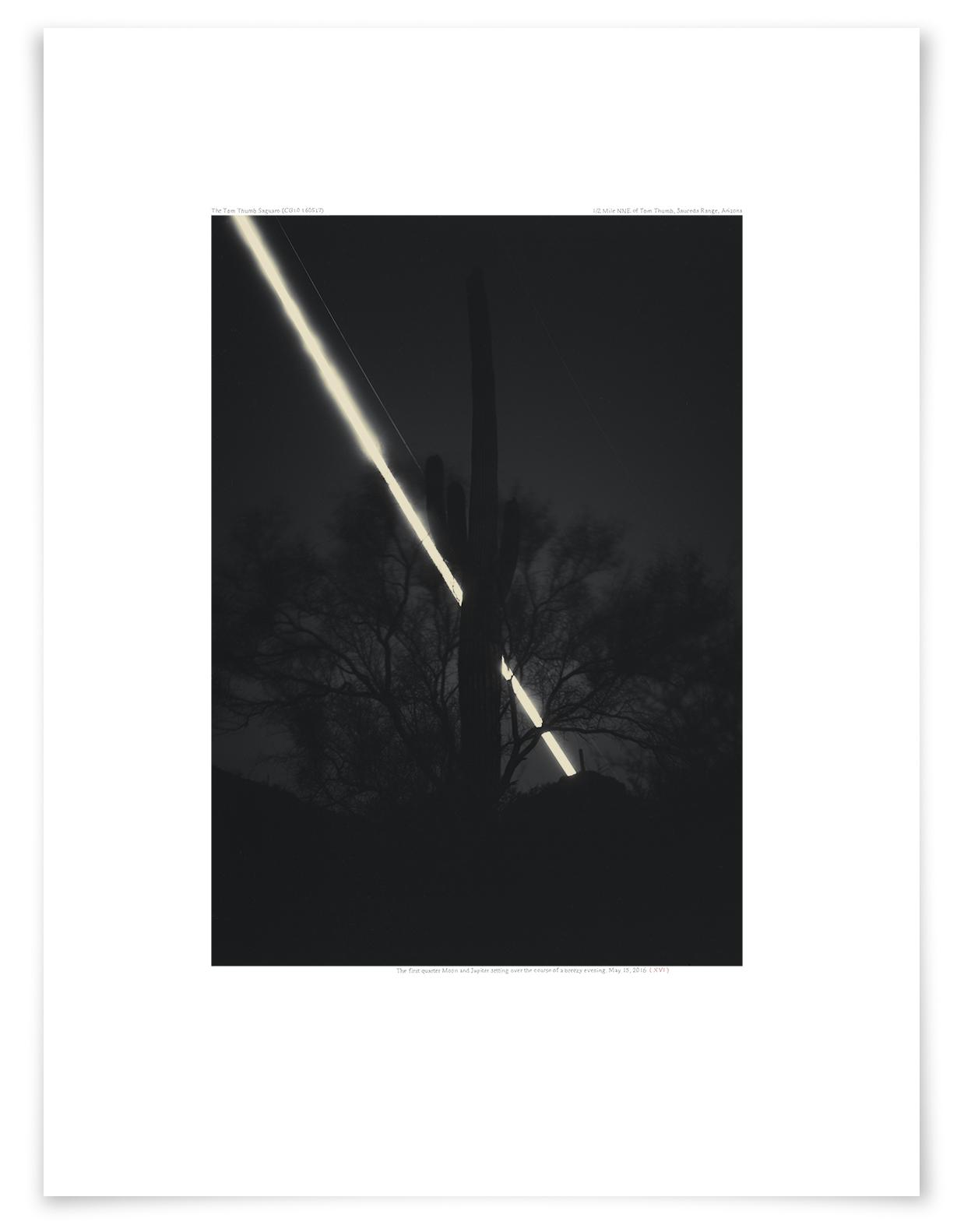 The Tom Thumb Saguaro (CG10 160515)   24 x 18 in (61 x 46 cm)