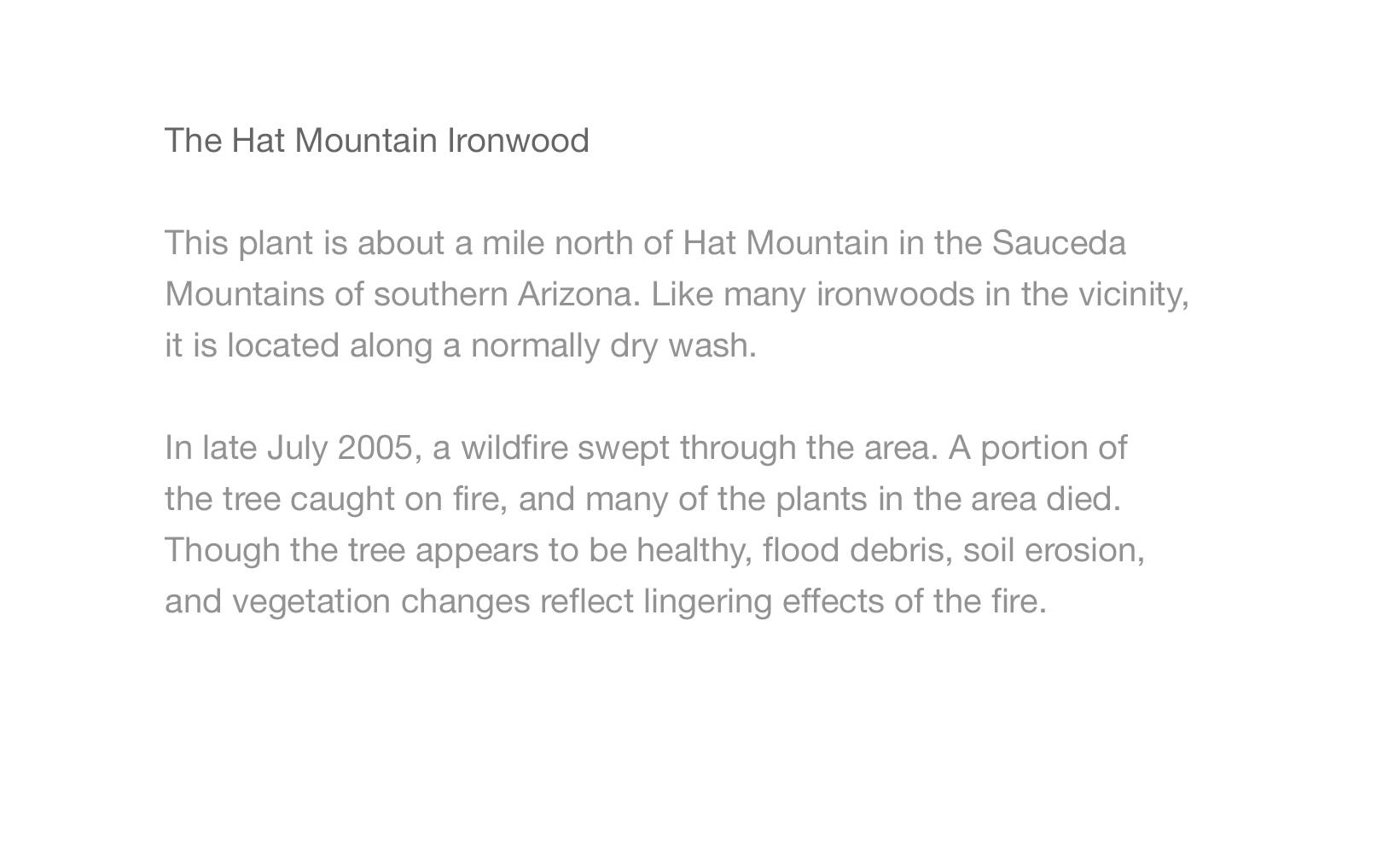 Hat Mtn Ironwood2.jpg