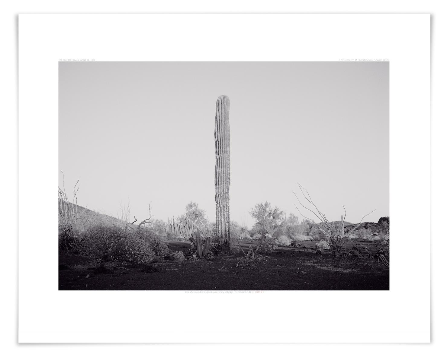 The Tecolote Saguaro (CG05 140423)   20 x 24 in (51 x 61 cm)