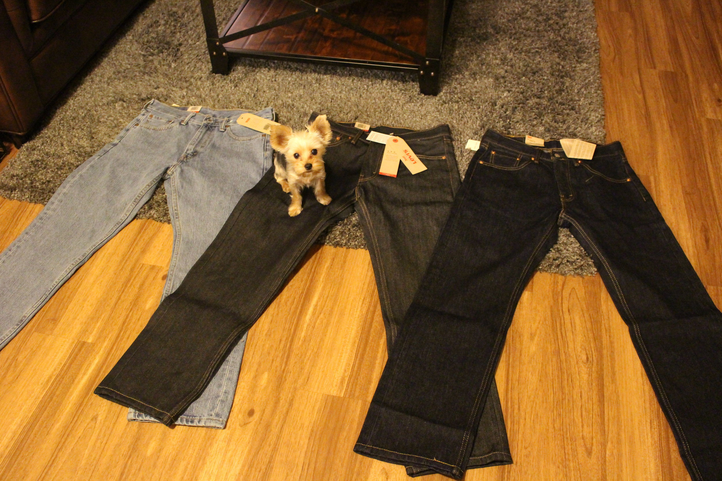 My new work pants, and Amazon decided to send me a dog as a special offer :).