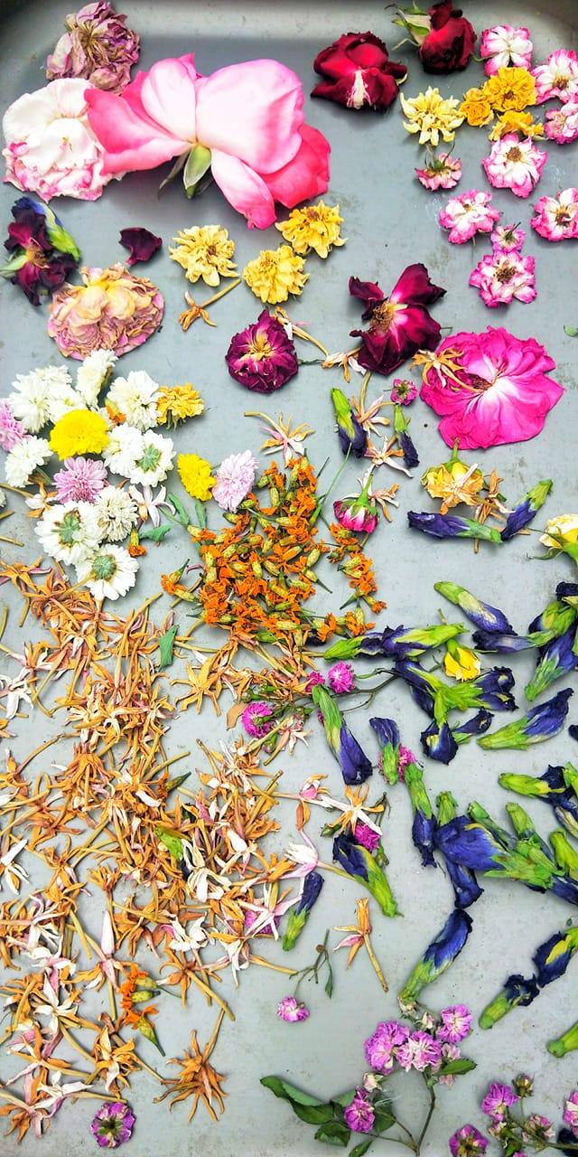 Butterfly Pea Tea Leaf Benefits