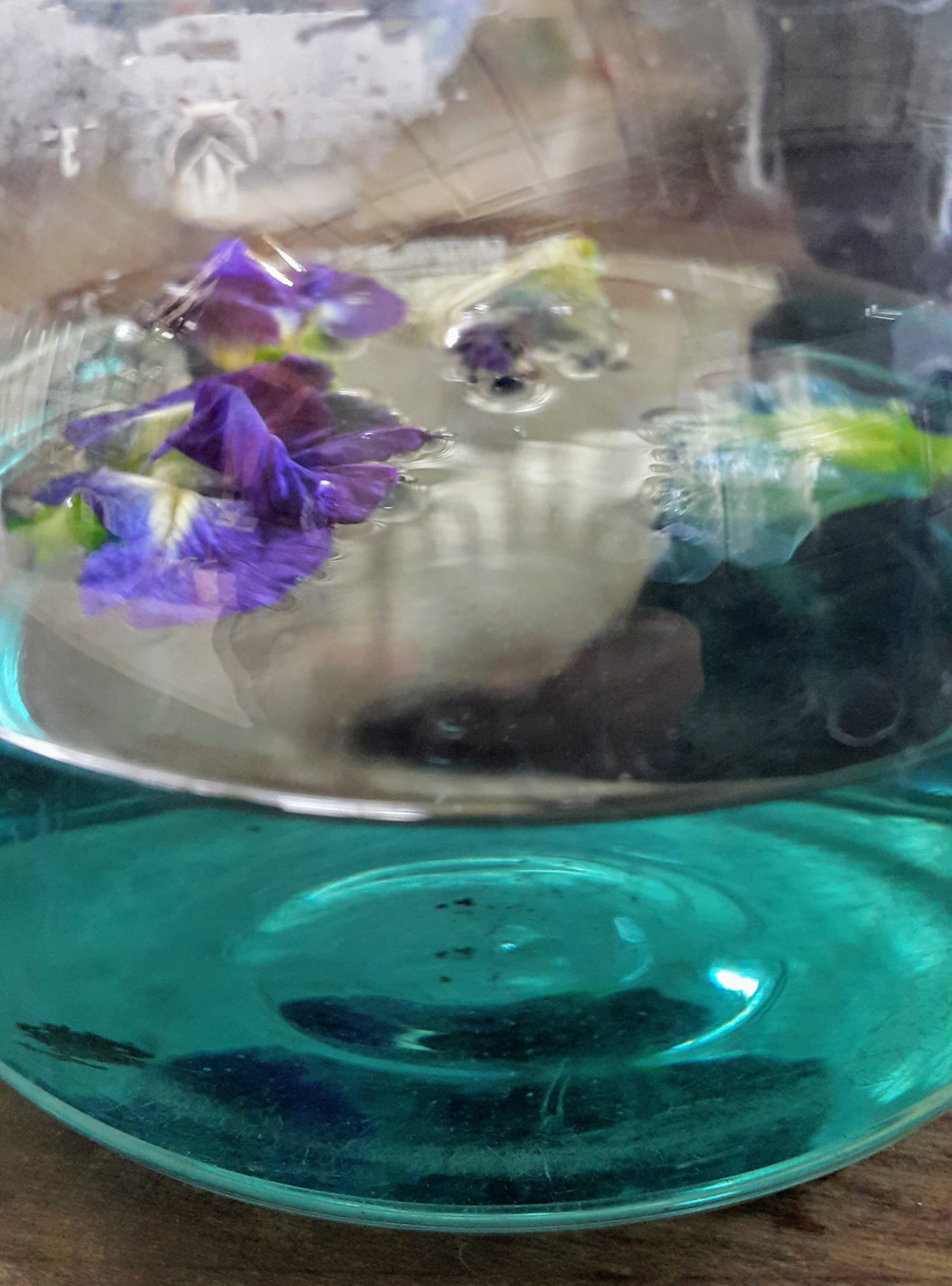 benefits of butterfly pea tea