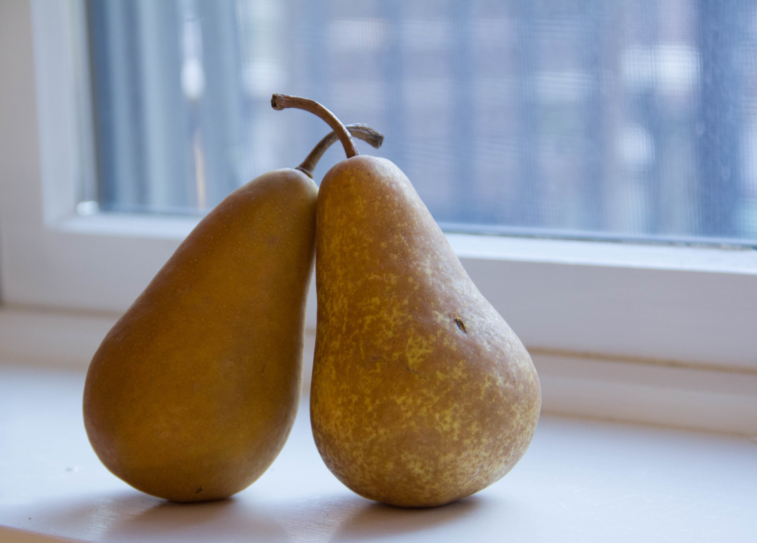 Just two pears, hanging out by the window.