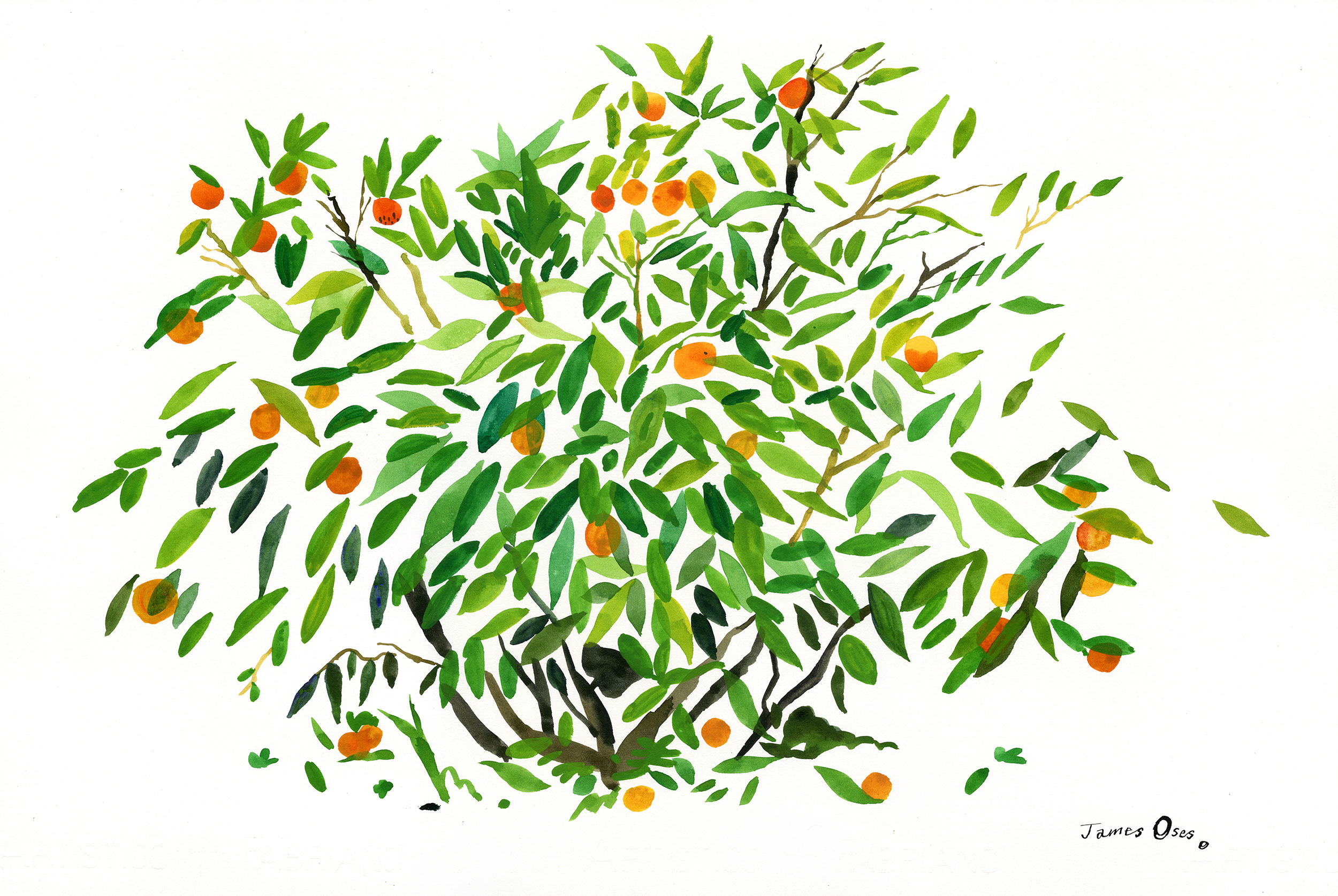 Orange tree by James Oses
