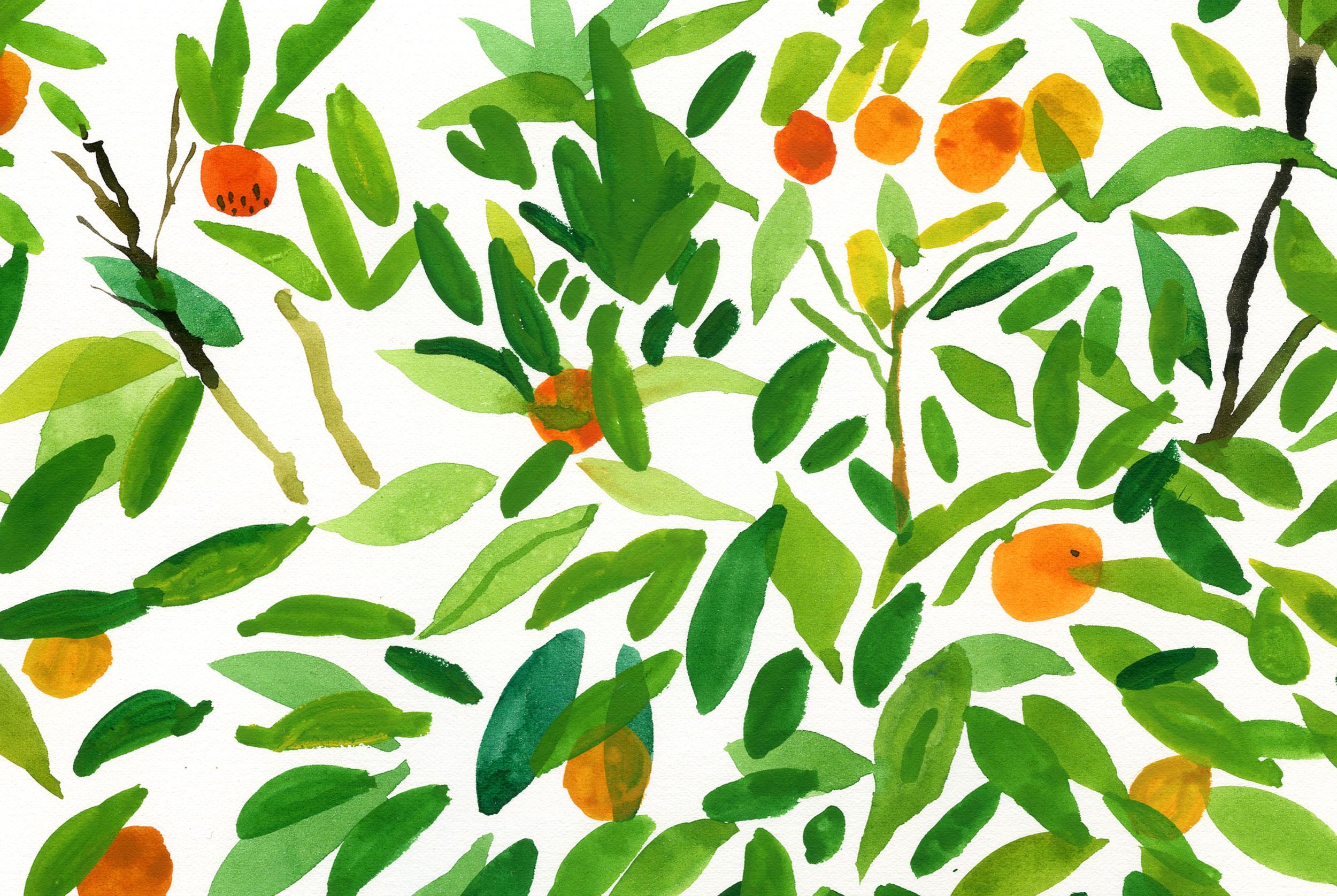 Orange tree by James Oses, image 2