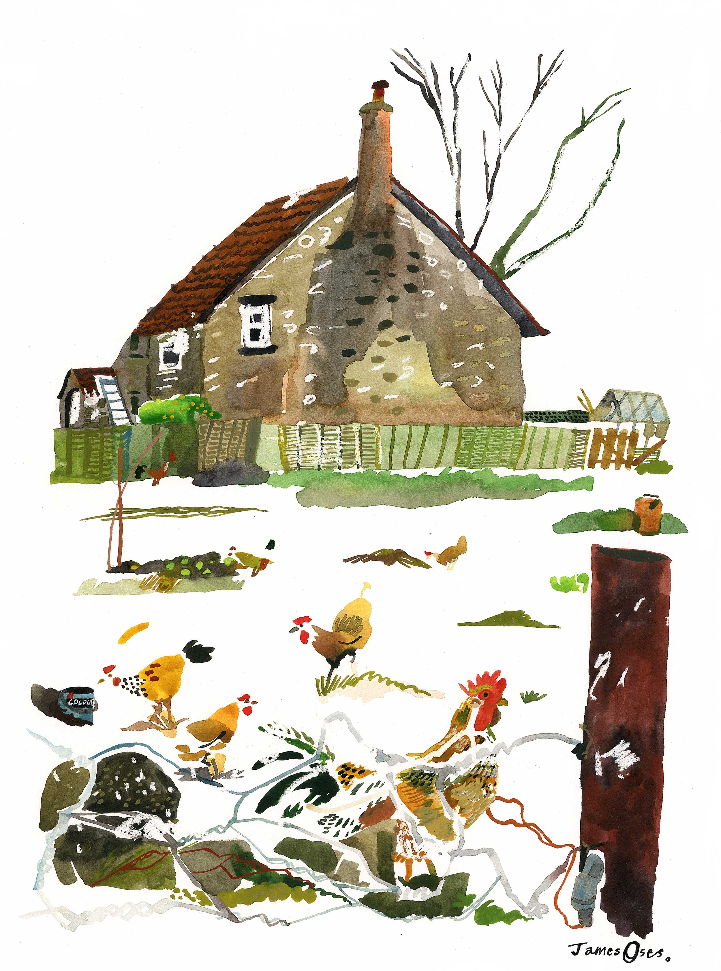 Somerset chickens by James Oses