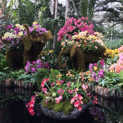 New York Botanical Gardens Orchid Show