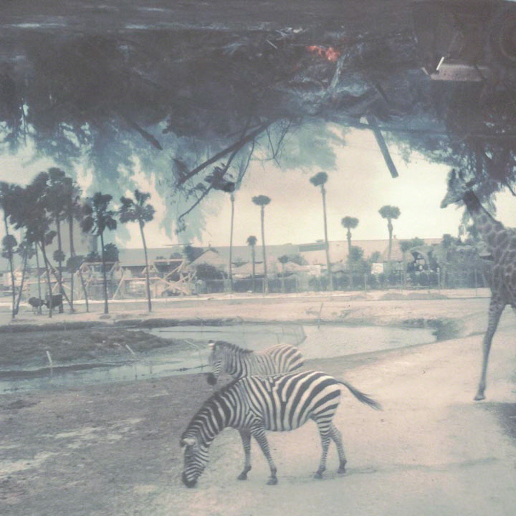 zebra-destruction.jpg