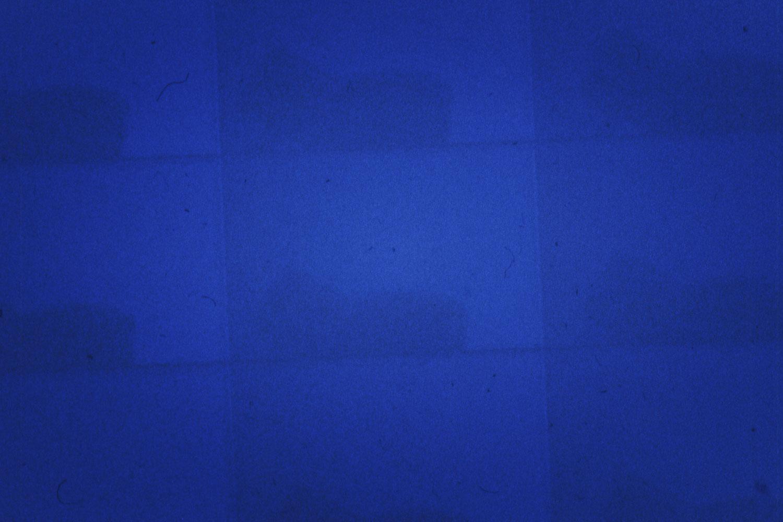 Bluebird-Seismographs-HEYDT.jpg