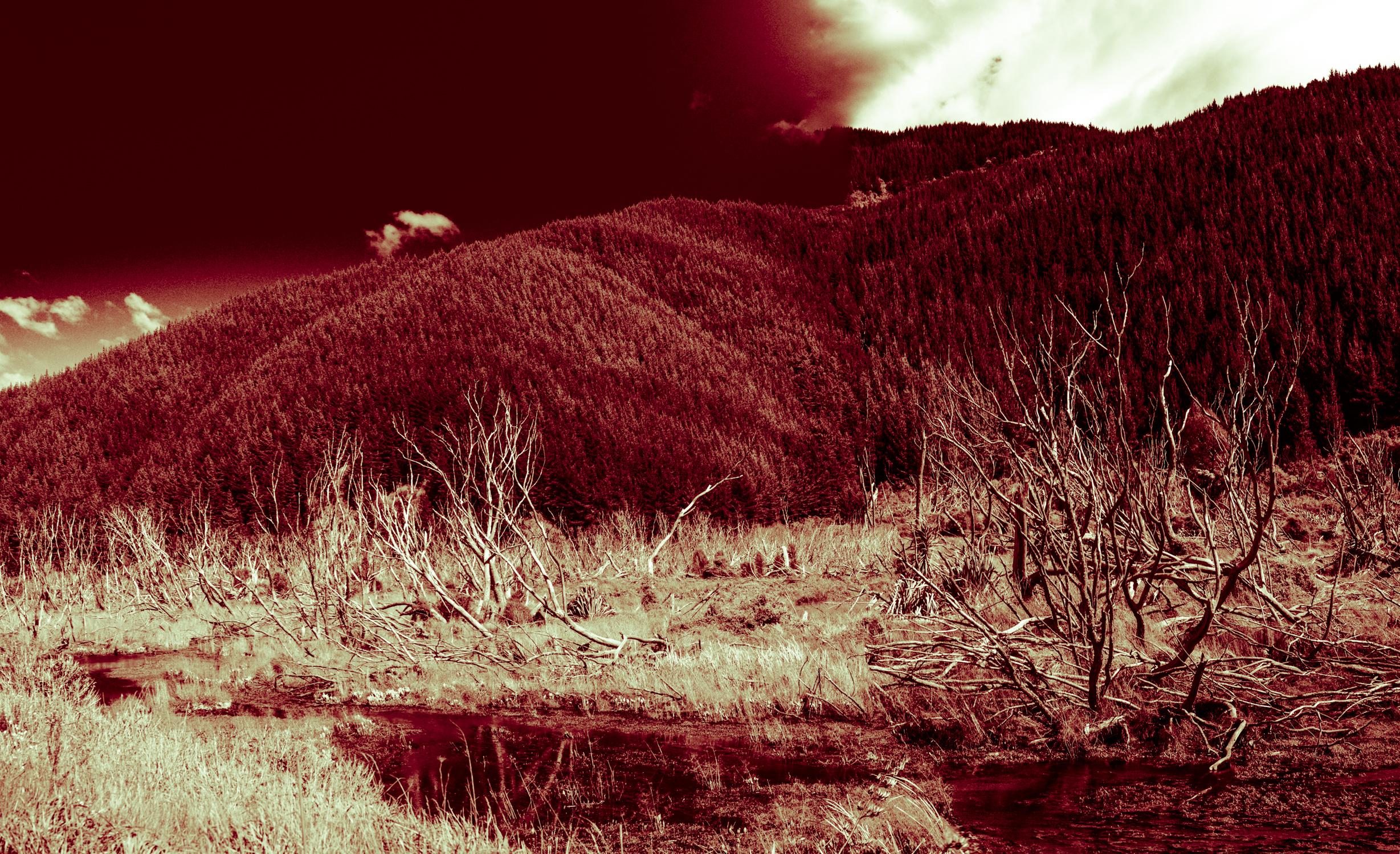 Deforestation-NewZealand-2016-HEYDT-142.jpg