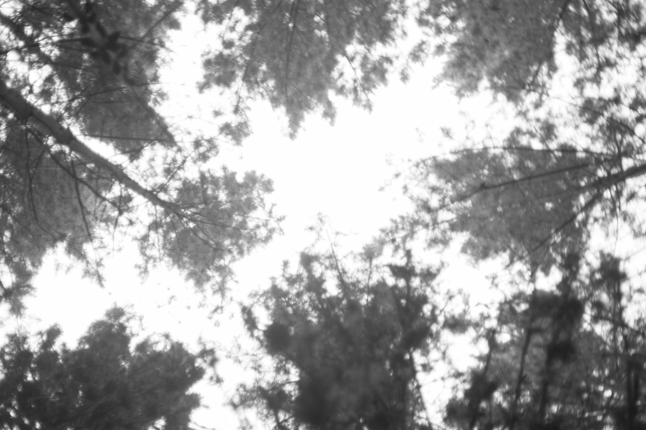 Deforestation-NewZealand-2016-HEYDT-6150.jpg